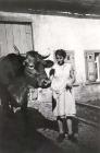 Emmy Weck mit dem Ochsen