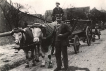 Philipp und Helmut Schmell mit dem Ochsengespann